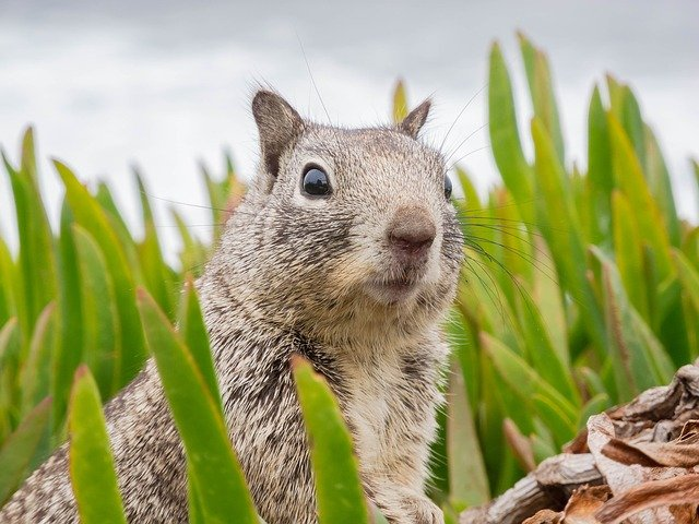 A squirrel standing on grass